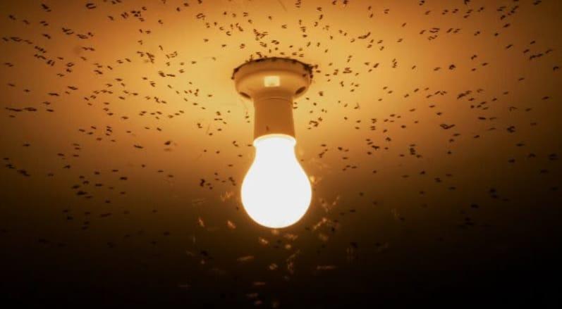 como espantar mariposas