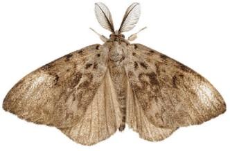 espantar mariposa